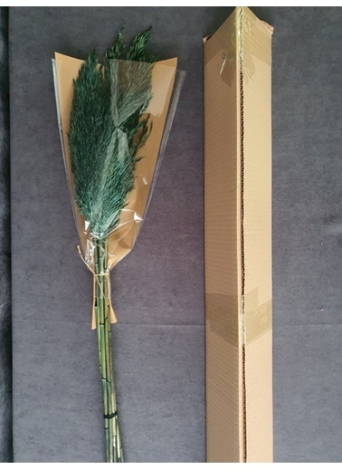 Kuru Çiçek Deposu Kuru Çiçek Şoklanmış 10'Lu Pampas Otu Karışık 100 Cm Yeşil